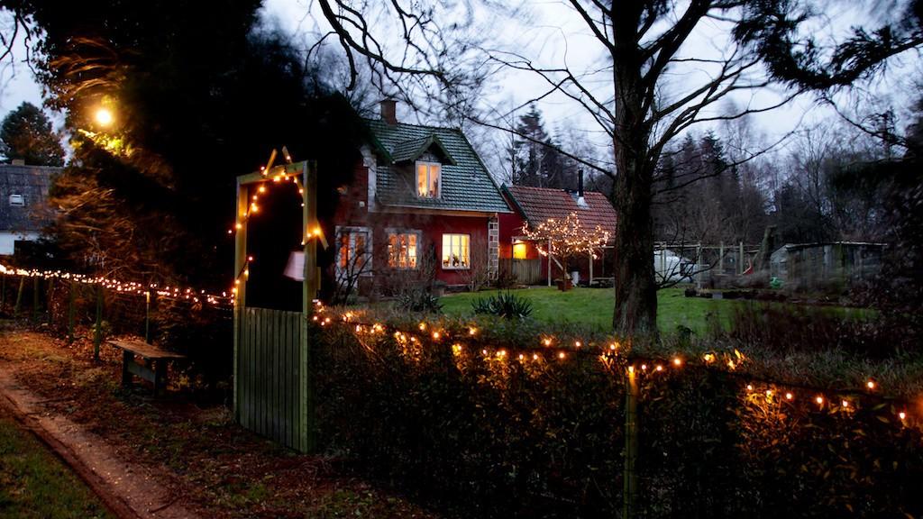 Juletræer Hillerød Staudegartneri juletræssalg december 1