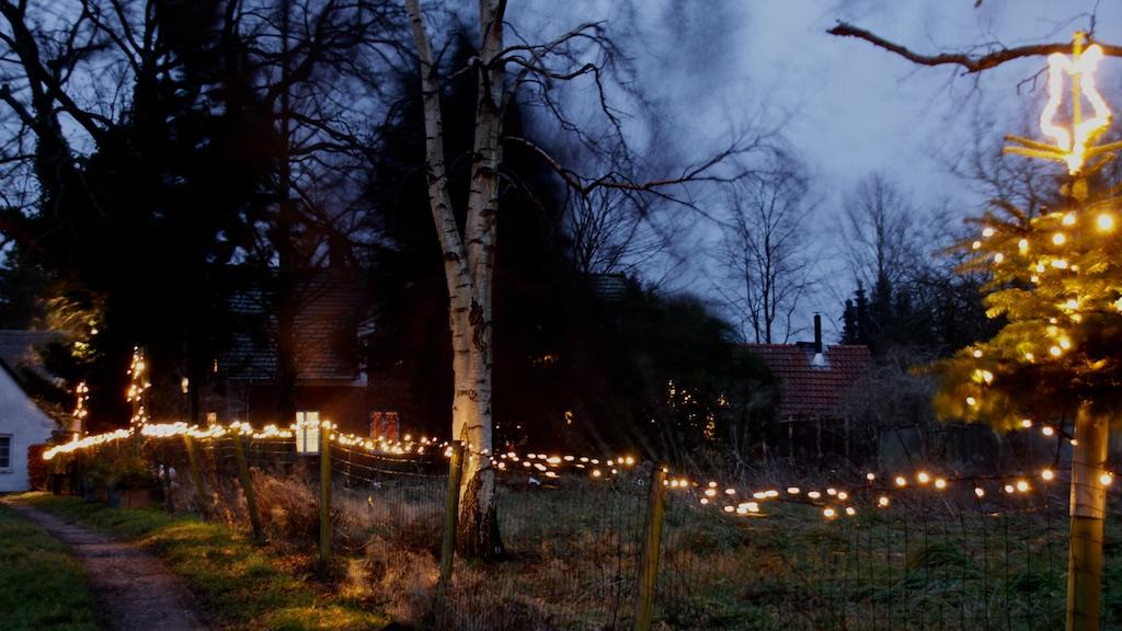Juletræer Hillerød Staudegartneri juletræssalg december 3